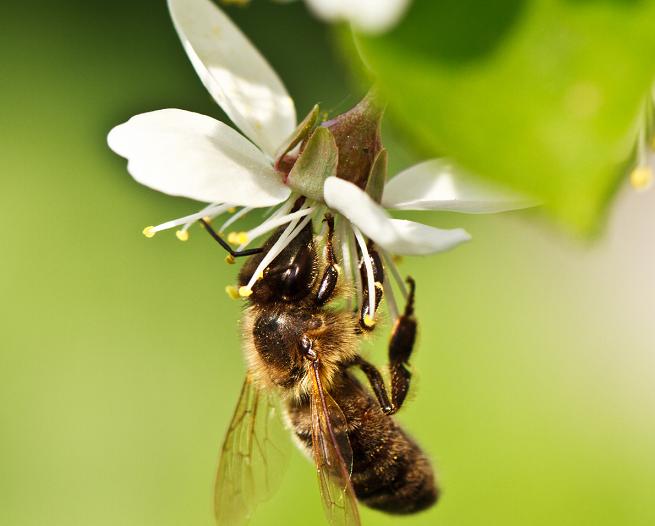 Bee Vectoring Technology s'installe sur AgriCo pour son développement européen
